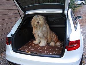 Viajar con mascota, audi ocasión, audi barato